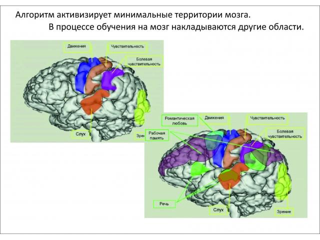 03_полифункциональность нейронов